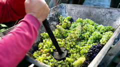 Squeezing grapes Stock Footage