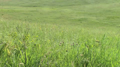 Summer grass on the wind Stock Footage