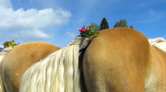 Stock Video Footage of Horse tail decorated with flower moving Alps Oberstdorf Allgau Bavaria Germany