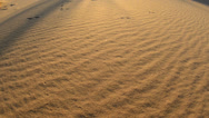 Stock Video Footage of Pan of Golden Sand Dunes