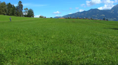 Tilt Cattle grazing in the Alps Oberstdorf Allgau Bavaria Germany Stock Footage