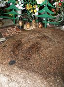 Symbolic stone of  footprints of  our lady of sorrow, grabski forest near lic Stock Photos