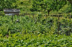 Stock Photo of France, allotment garden in Les Mureaux