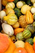 background from small different pumpkins - stock photo