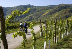 Stock Photo of vineyards of wachau region in lower austria
