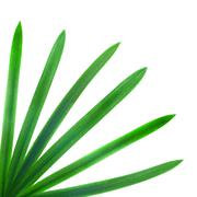 Green palm leaves isolated on white Stock Photos