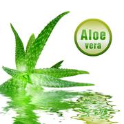 close-up photo of green aloe vera with icon isolated on white - stock photo