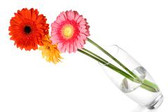 Bouquet from daisy-gerbera in glass vase isolated on white Stock Photos
