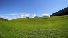 T/L Fisheye Cattle Livestock grazing in the Alps Allgau Bavaria Germany Stock Footage