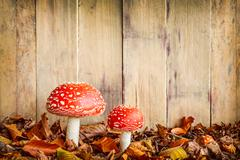 Stock Photo of fly agaric mushrooms against an old wooden background