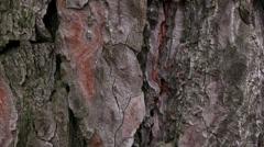 TREE BARK Stock Footage