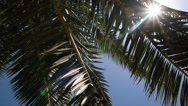 Stock Video Footage of palm tree - HD