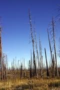 aftermath of forest fire of 2000 - stock photo