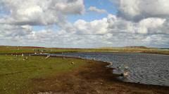 Landscape Falkland Islands Stock Footage