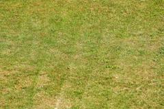 Green grass freshly mown background Stock Photos
