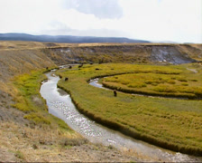 Bison herd grazing in Hayden Valley creeks + pan Stock Footage