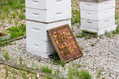 Bee hives - stock photo