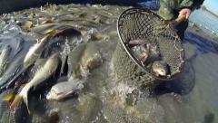 Fish Farm Stock Footage