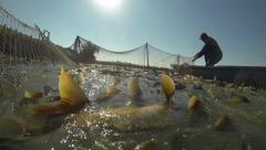 Fisherman Pulling a Fishing Net Stock Footage