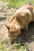 Cat and mouse in garden Stock Photos