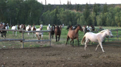 COWBOYS HERDING HORSES IN ROCKY MOUNTAINS Stock Footage