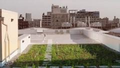 Green Roof Showing Transition to Green With Color Effect Stock Footage