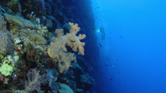 Scuba diver hold on light at coral reef wall Stock Footage