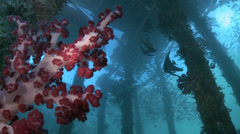 Jetty, pier from underwater - two footage Stock Footage
