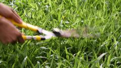 Cutting Grass Stock Footage