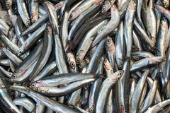 Anchovies for sale - stock photo