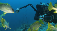 Scuba diver swimming across a school of tropical fish Stock Footage