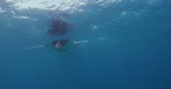 Manta Rays 2k Stock Footage