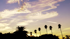 Sunset Time Lapse over Palm Trees - stock footage