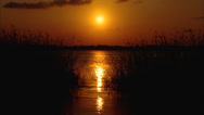 Stock Video Footage of Sunset Florida Marshland 2