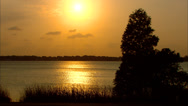 Stock Video Footage of Sunset Florida Marshland Tree