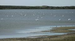 Swan in Denmark 4 Stock Footage
