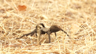 Stock Video Footage of Tarantula Slow Motion