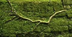 powerful root - stock photo