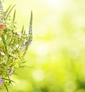 Summer meadow flowers Stock Photos