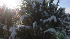 Pan snow covered shifting sands with ancient juniper shrubs Stock Footage