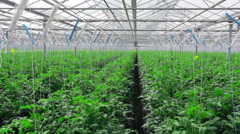 Greenhouse inside in - stock footage
