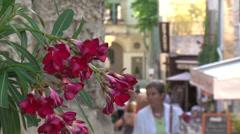Provence street flower Stock Footage