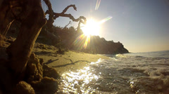 Crooked tree it can be seen in the sun and sea Stock Footage
