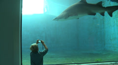 Boy taking picture of Sand Tiger Shark HD 1080p 29.97 fps Stock Footage
