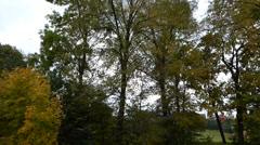 Leaves falling from the tree Stock Footage