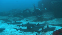 lot of reef sharks and an scuba diver - stock footage