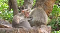 Spike Hair Monkey Stock Footage