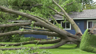 Stock Video Footage of Storm Damage Tree On House