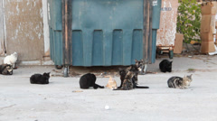 1080p Stock - 10 Alley Cats at dumpster Stock Footage