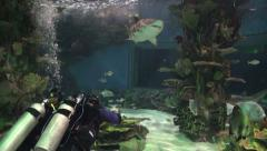 Sand tiger shark with two scuba divers in aquarium - Carcharias taurus Stock Footage